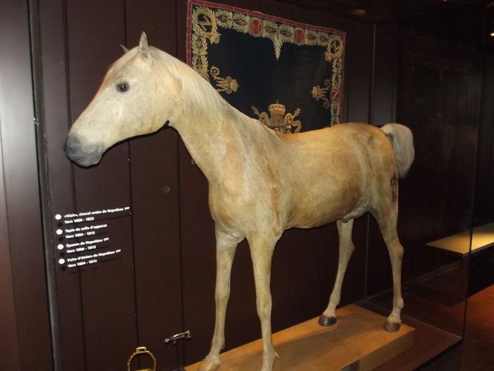 Исператорский конь Визирь в Музее армии (Париж). | Фото: fr.wikipedia.org.