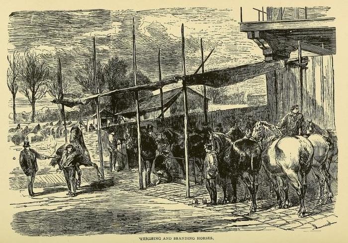 Взвешивание и отбор лошадей. | Фото: archive.org.