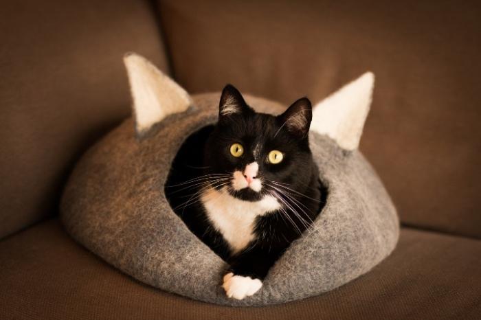 Котик в домике. | Фото: pikabu.ru.
