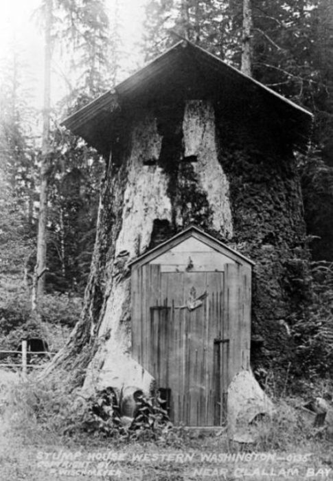 Дом в пне. Клаллам Бэй (Clallam Bay), Западный Вашингтон.   Фото: historylink.org.