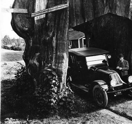 Участок Pacific Highway, проложенный сквозь 6-метровый пень красного кедра, 1920 год.   Фото: digitalcollections.lib.washington.edu.