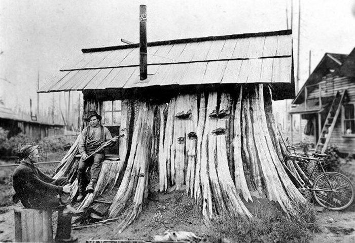 Кедровый пень, приспособленный под дом. 1901 год. | Фото: boingboing.net.