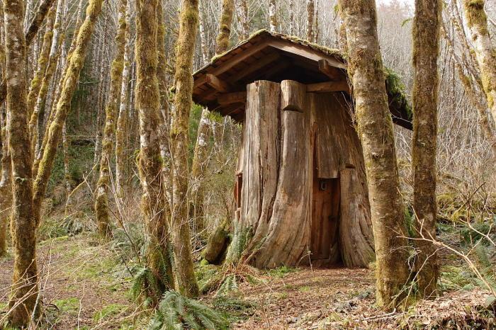 Дом в пне. Округ Пасифик, штат Вашингтон. | Фото: mapio.net.