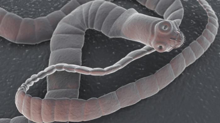 Солитер – паразит человека. | Фото: zhkt.guru.