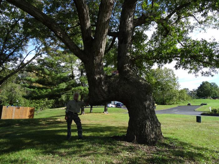 Дорожное дерево в штате Миссури. | Фото: trailmarkertree.com.
