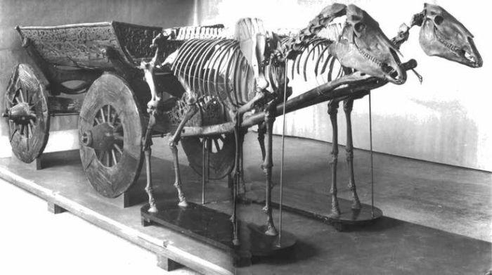Повозка, запряженная лошадьми. Археологическая находка из кургана в Осеберге. | Фото: pinterest.com.