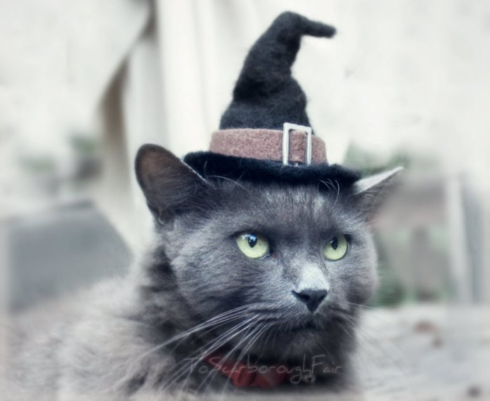 Кошка в чародейском колпаке. | Фото: thegreenhead.com.