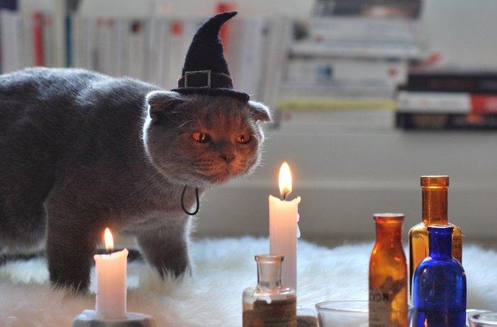Кошка – символ зла, колдовства и женской сексуальности. | Фото: etsy.com.