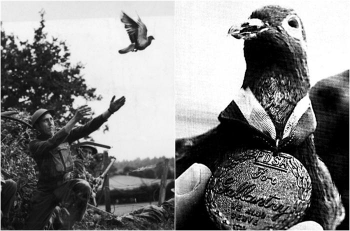 Герой войны Шер Ами – маленькая птичка, спасшая целый батальон.