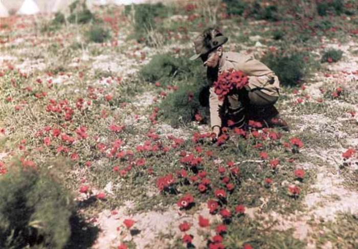 Австралийский кавалерист собирает цветы. Палестина, 1918 год. | Фото: greatwar.nl.