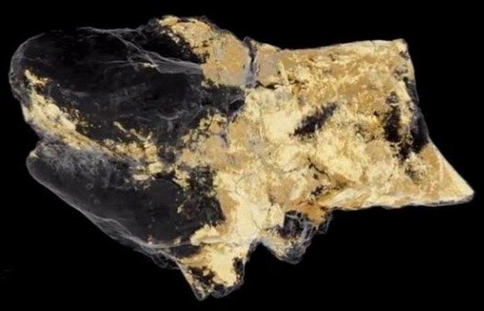 Выставлен на обозрение лот «Мозг динозавра».