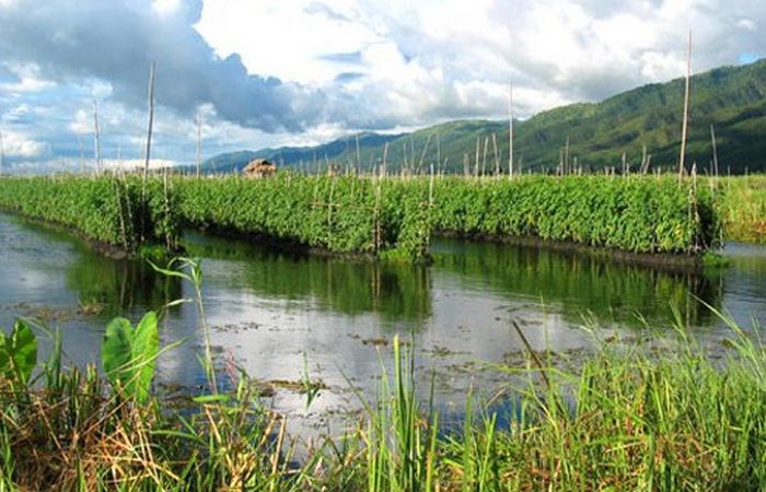Плавающие сады Сочимилько./ Фото: bloglandshafta.com