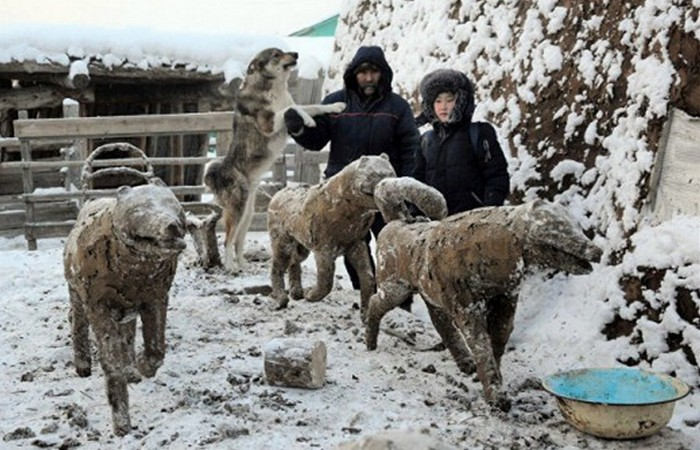 Скульптура из навоза: «Собачья упряжка»./ Фото: news.vse42.ru