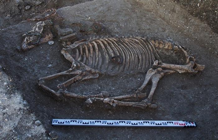Жертвенное животное в основании храма./ Фото: vranya.net