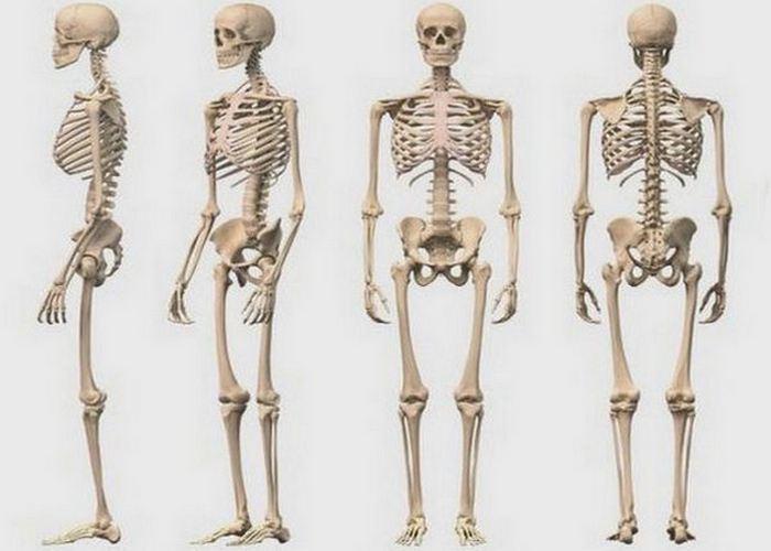 Торговля скелетами: костные масла.