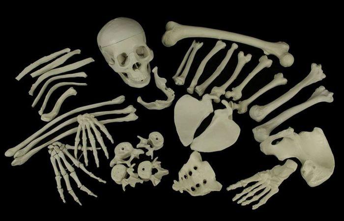 Торговля человеческими скелетами: «послевоенный спад» в Англии.