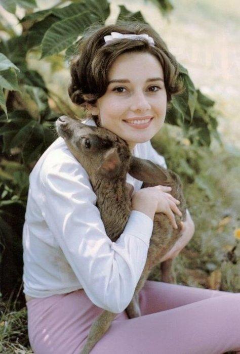 Одри Хепберн и оленёнок Пиппин, 1958 год. / Фото: www.ucrazy.ru