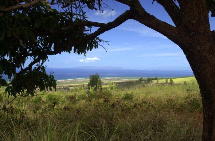 На острове Ниихау. / Фото: www.wikiway.com
