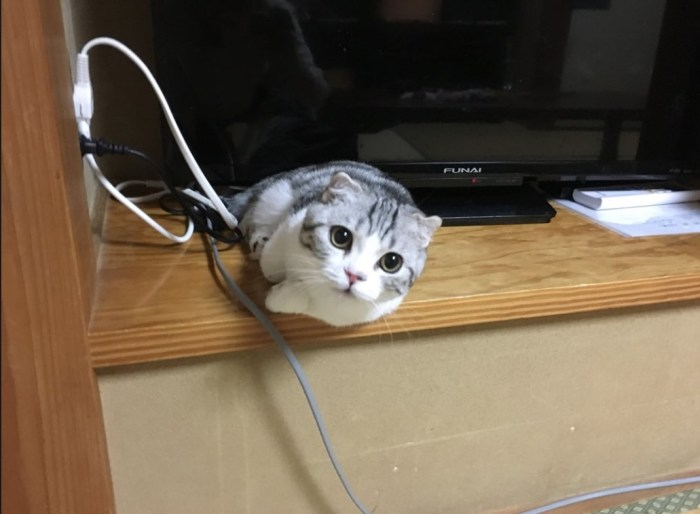 Кот из отеля Makikat Yugawara . / Фото: www.twitter.com/mituyasann