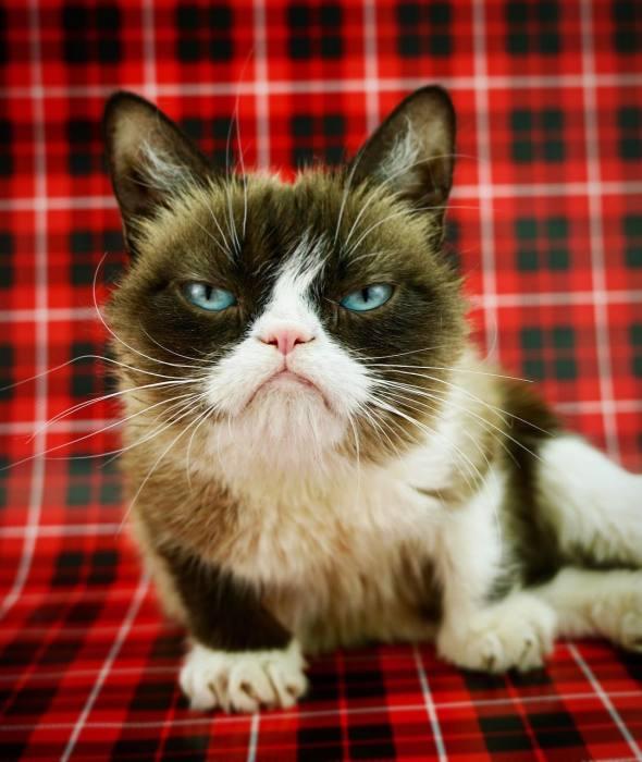 Сердитая кошка по имени Соус Тардар. / Фото: www.memepedia.ru
