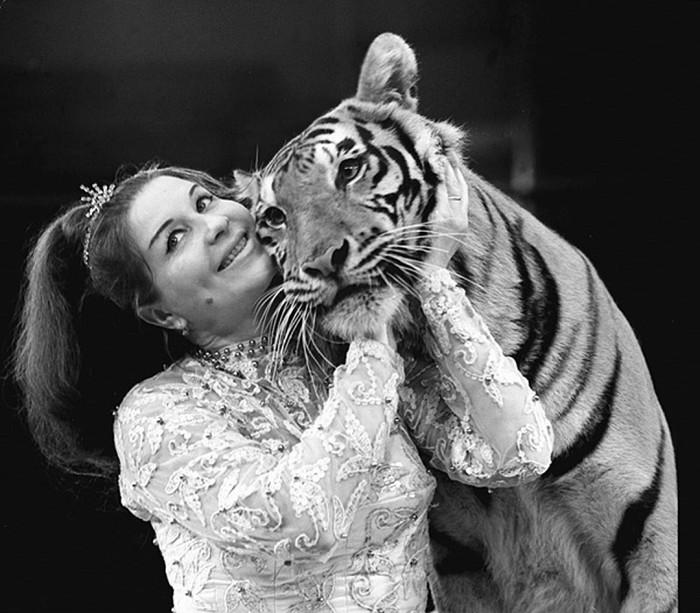 Народная артистка РСФСР, дрессировщица тигров Маргарита Назарова в 1969 году. / Фото ИТАР-ТАСС