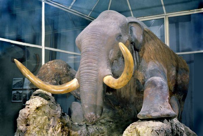 Мамонт.  / Фото: www.zin.ru