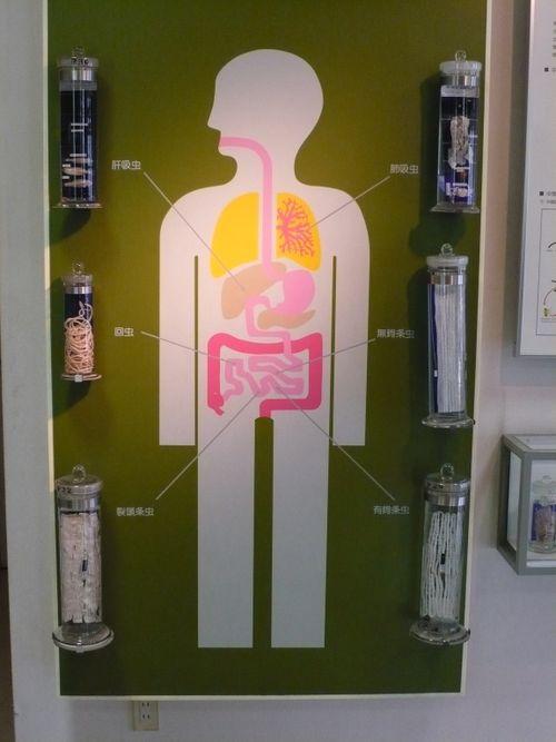 Стенд «Важные паразиты человека». / Фото: www.michaelbooth.typepad.com