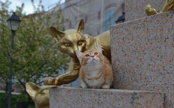 И кошки тоже приходят в гости в этот сквер. / Фото: www.munchkin-cat.ru