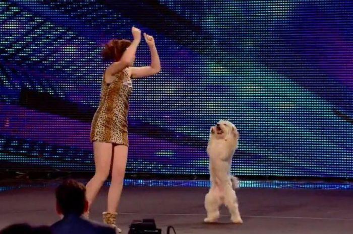 Танцующий Пудси. / Фото: www.pmo.ee