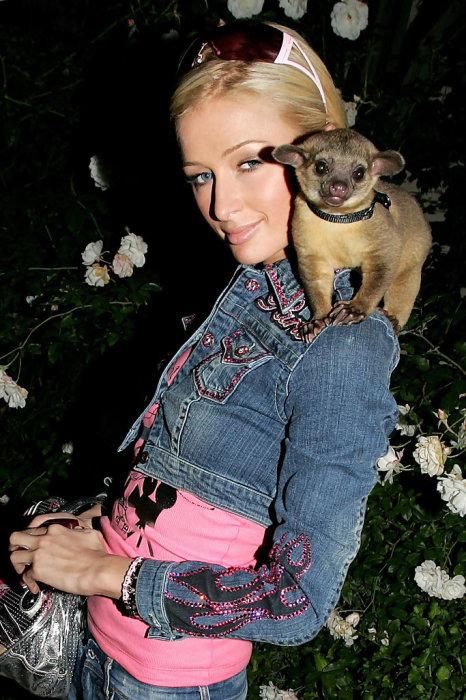 Пэрис Хилтон и её кинкажу. / Фото: www.zimbio.com