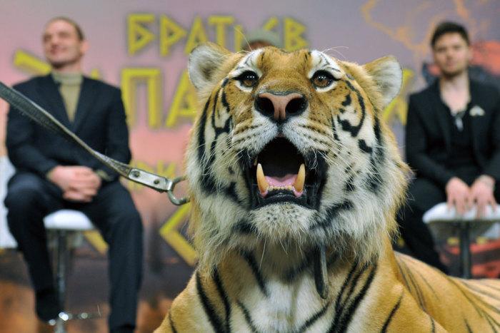 Тигр Мартин. / Фото: www.aif.ru