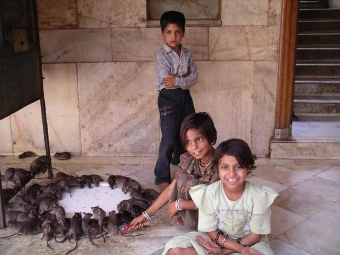 Дети в храме Карни Мата. / Фото: www.bestourism.com