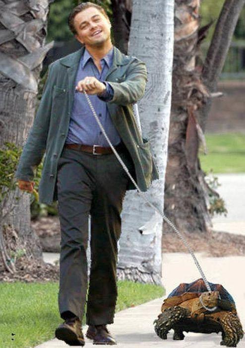Леонардо Ди Каприо с черепахой. / Фото: www.mundo.com