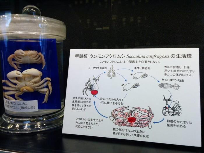 Экспонат музея с пояснением. / Фото: www.japantravel