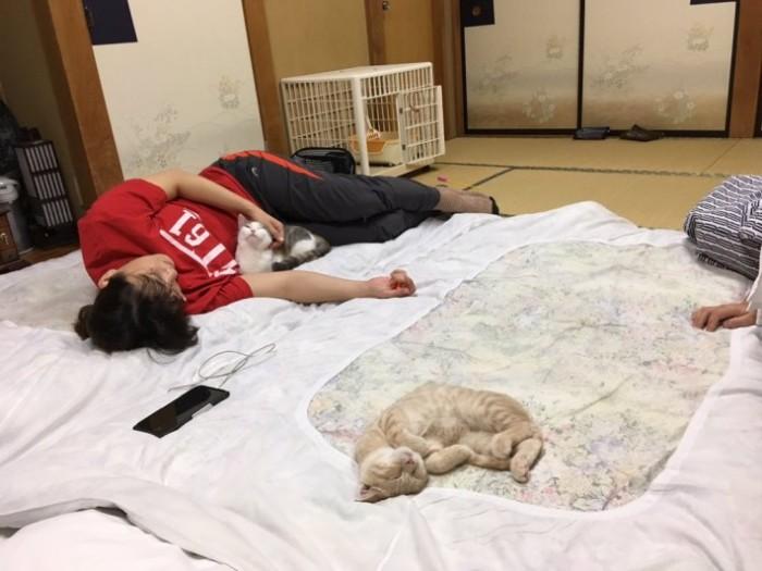 В номере никто не может помешать общению человека с котом. / Фото: www.yaustal.com