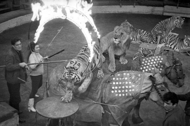 фото биография назарова цирк сожалению, всем