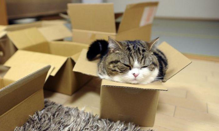 Мару - повелитель коробок. / Фото: www.columbian.com