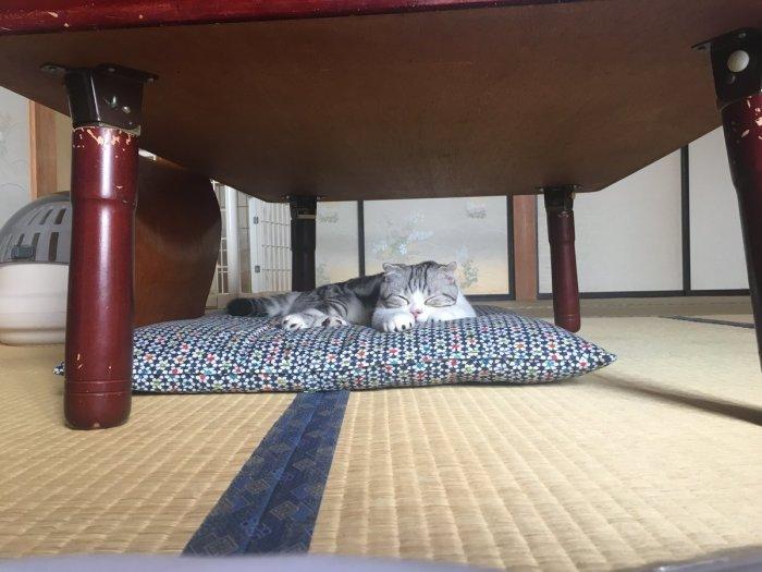 Коты в этой гостинице чувствуют себя полноправными хозяевами. / Фото: www.medialeaks.ru