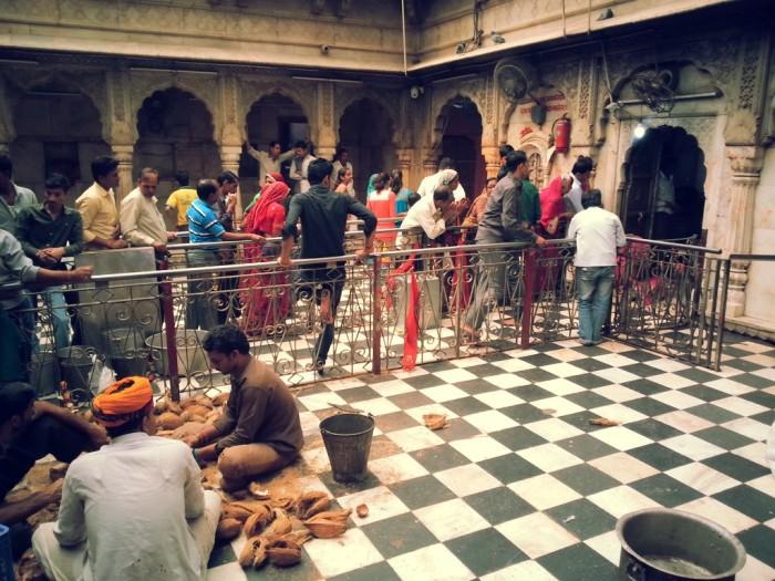 Очередь  в храме Карни Мата. / Фото: www.mapsofindia.com