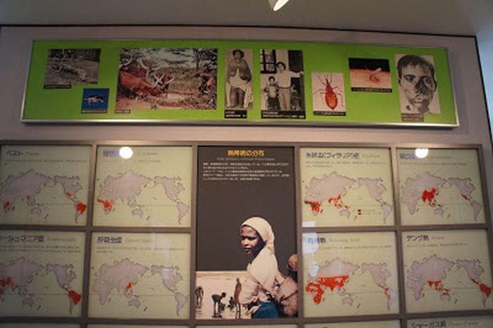 Карты, показывающие ареал обитания опасных паразитов. / Фото: www.googleusercontent.com