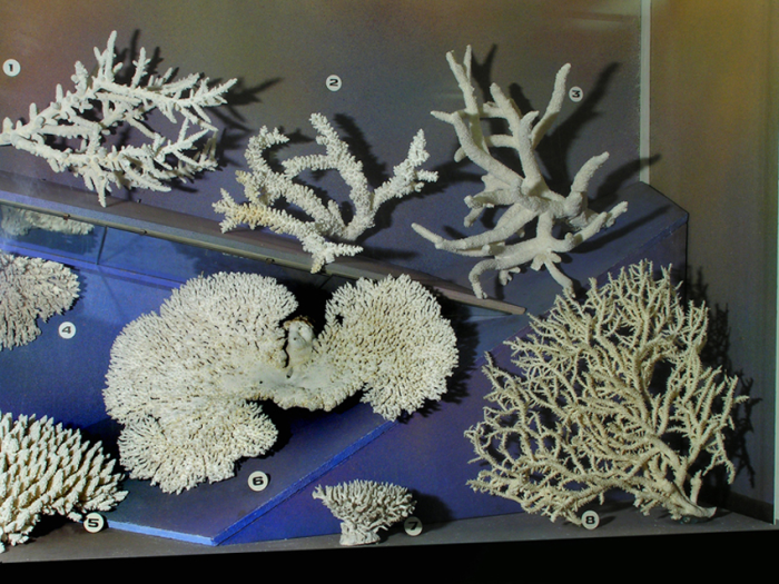 Мадрепоровые кораллы.  / Фото: www.zin.ru