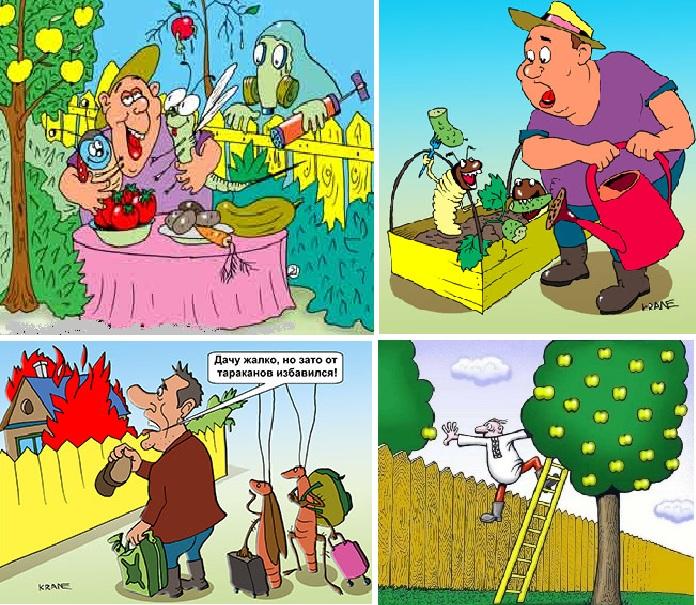 Смешные картинки про огород и цветы с надписями