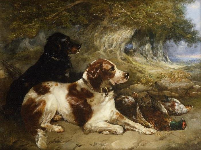 «Охотничьи собаки».