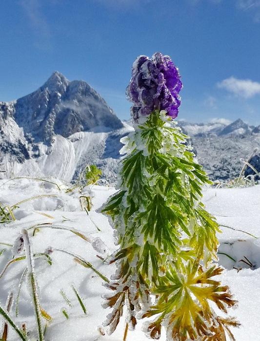 Хрустальные композиции изо льда и живых цветов.