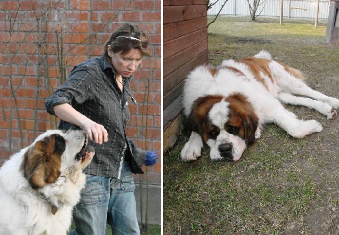 Арбенина с сенбернаром Робеспьером. 2007 год. | Фото: snipers.net.