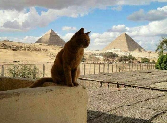 Египет и кошки.