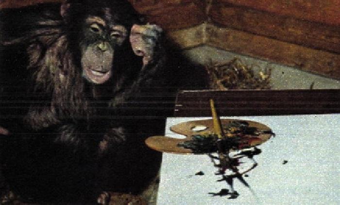 Шимпанзе Питер в творческом раздумии.  | Фото: livejournal.com.