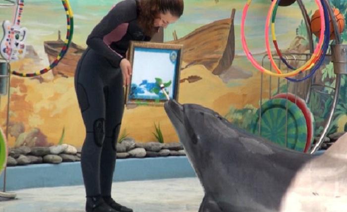Дельфин-художник. Фото: zooblog.ru.