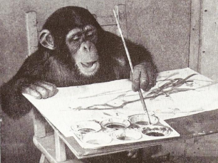 Шимпанзе Конго -«гениальный живописец» и актер. | Фото:  wikipedia.org.