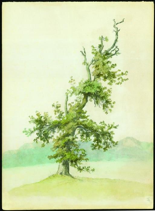 Старое дерево. Государственный архив РФ